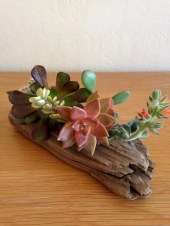 Ideas to arrange your succulent with driftwood 49